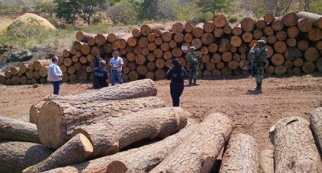 Tala ilegal está acabando con el bosque Izta-popo de Puebla