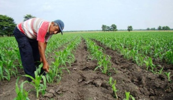 apoyos para agricultores