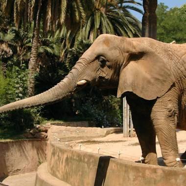 Los zoológicos son necesarios para la conservación