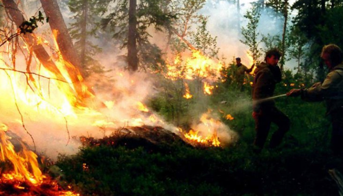 Tres mil millones de hectáreas están en riesgo por incendios en Siberia