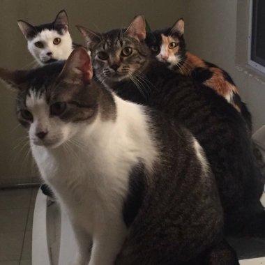¿Por qué se adopta menos a los gatitos? por estos mitos