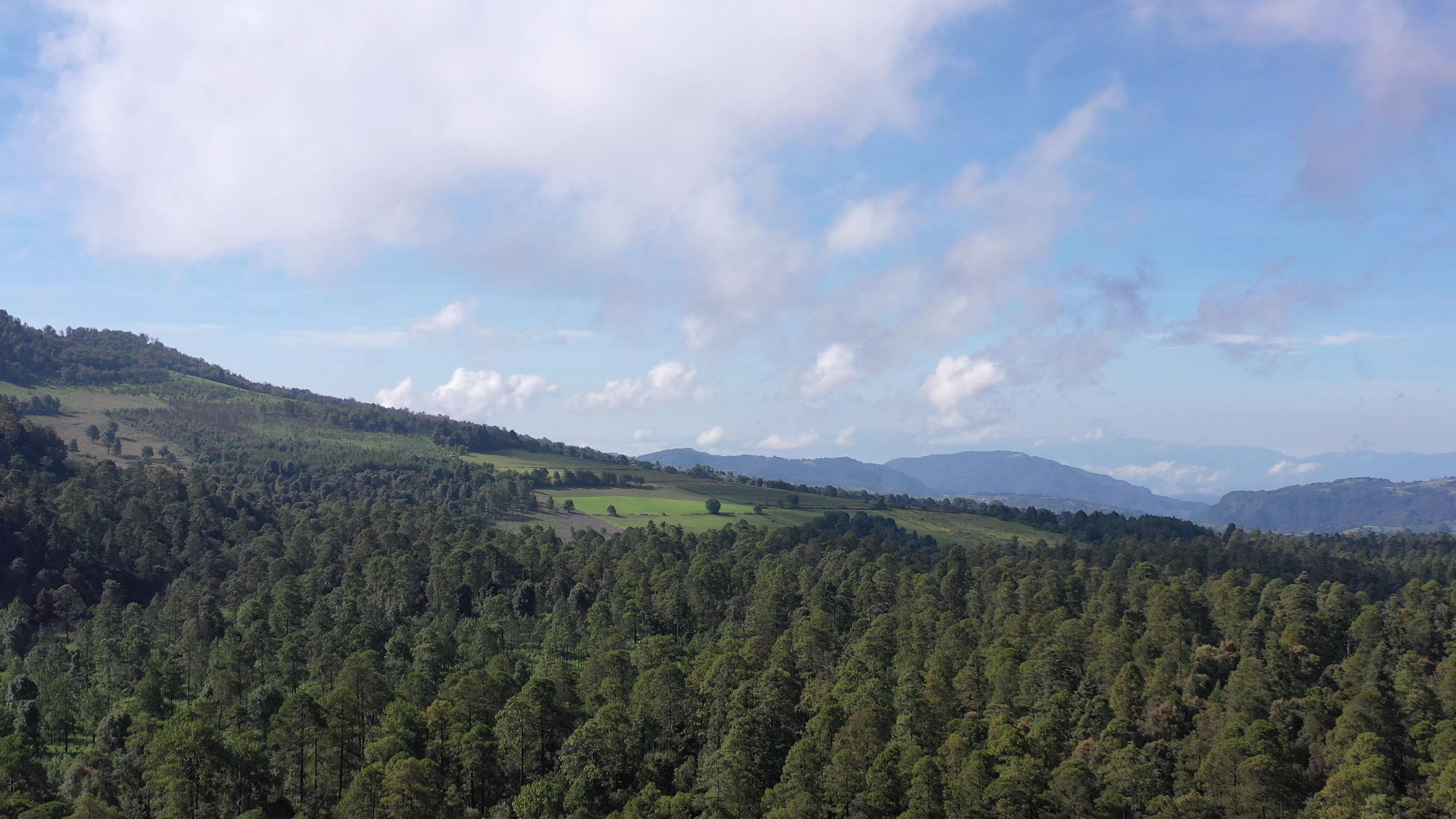 Bosque de Agua, en Estado de México (Fotografía: Sofía Salcedo / Plumas Atómicas)