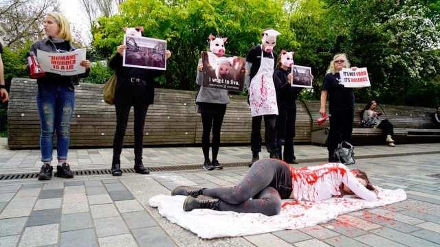 Hombre golpea a mujer vegana manifestante