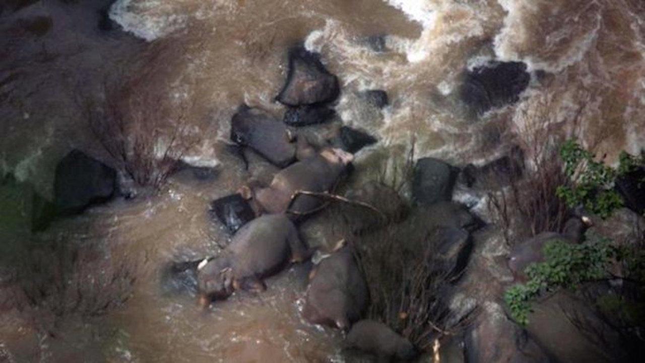 11 elefantes trataron de salvar a una cría y murieron en el intento.