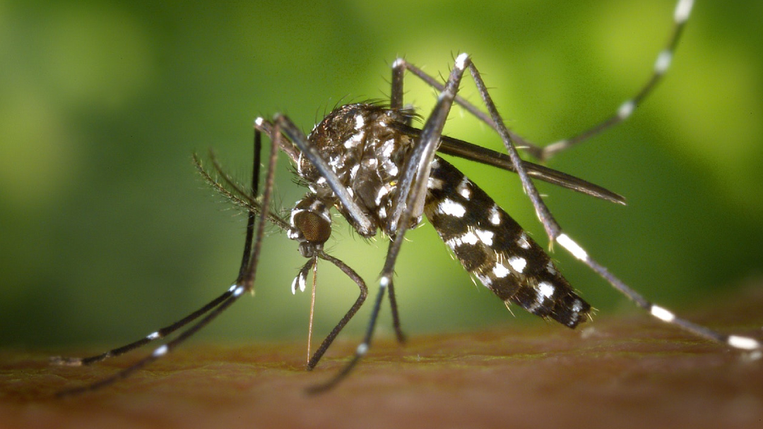 07/11/19, Dengue, Transmisión, Sexual, Contagio