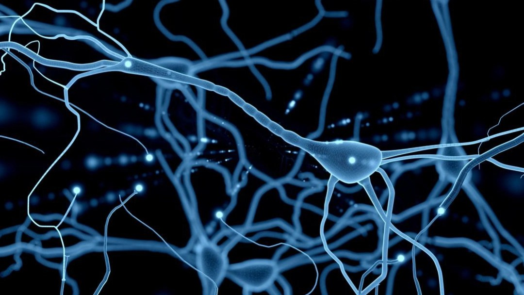 05/11/19, Neurona, Muerte, Video, Cerebro