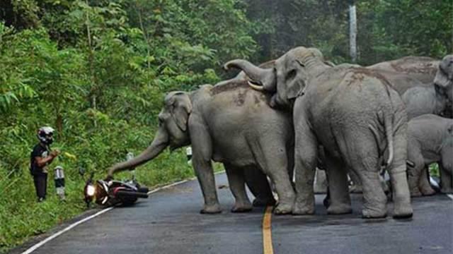 Elefante llamado Osama Bin Laden mata cinco personas
