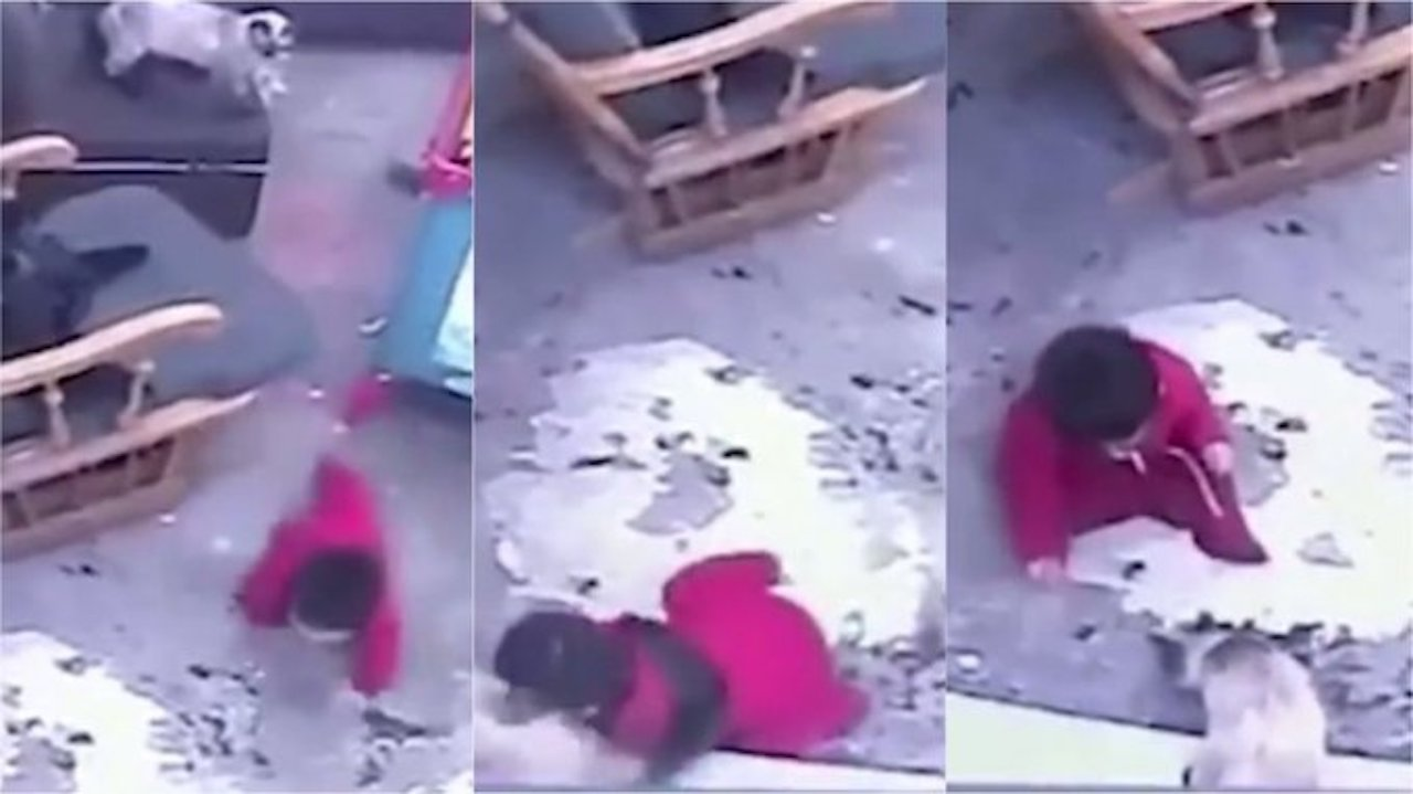 Un gato salvó a un bebé que iba a caer de las escaleras