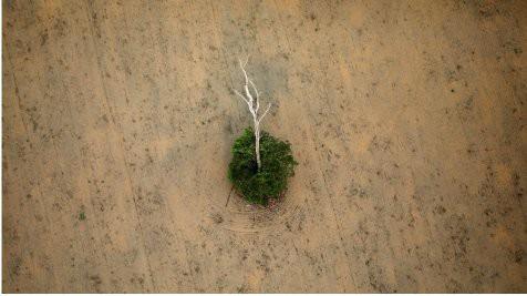 La deforestación en Amazonia podría convertirla en una sábana