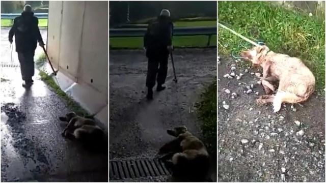 Cazador dispara y arrastra a su perra moribunda.