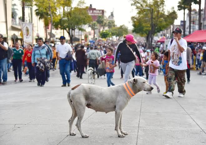 Peregrinos abandonan a 29 perros en Basílica de Guadalupe.