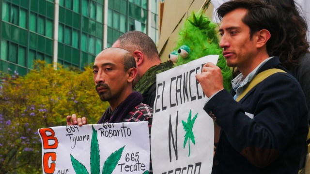 Cannabis, Mariguana, Mexico, Movimiento Cannabico Mexicano