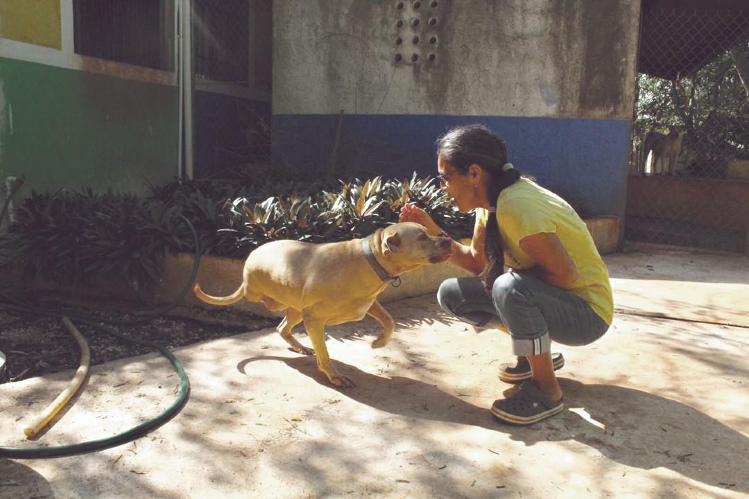 Perros Mestizos De Yucatán Son Adoptados y Enviados a Canadá