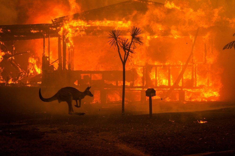 Mil Millones De Animales Han Muerto Por Incendios En Australia