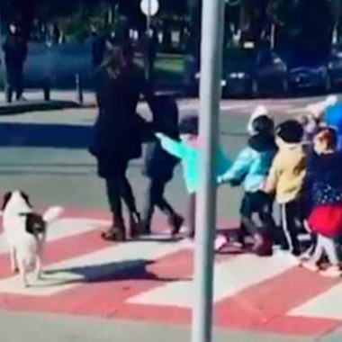 Kupata: perrito callejero que ayuda a niños a cruzar la calle