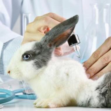 Suiza prohíbe venta de cosméticos testeados en animales.
