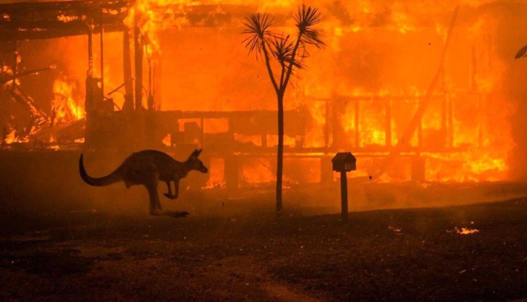 NASA: Humo de incendios en Australia recorrerá el mundo