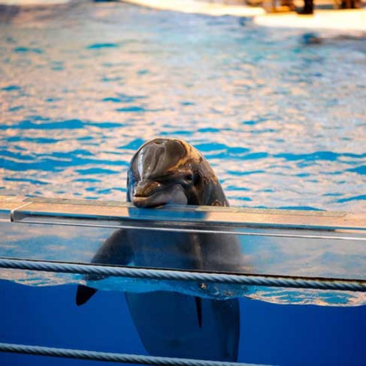 Canadá prohibe tener ballenas y delfines en cautiverio.