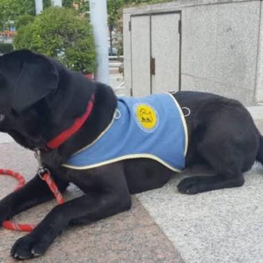 Roban a Punta De Pistola a 'Pocahontas', Una Perra Entrenada Para Ayudar a Una Niña Con Discapacidad