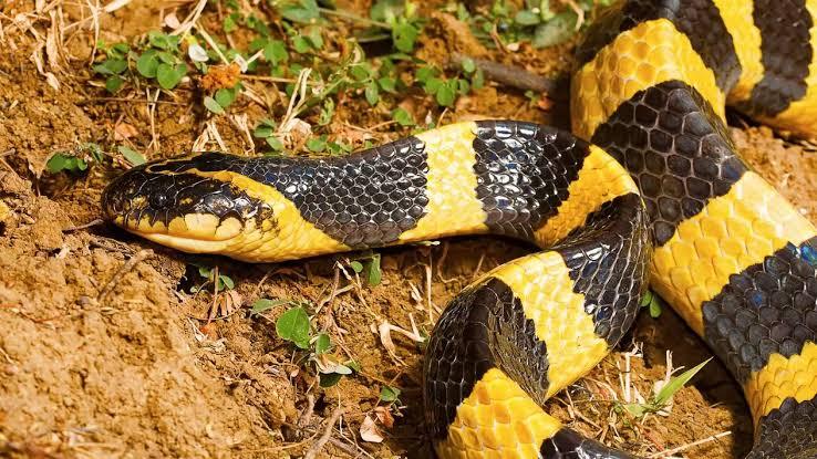 Murciélagos y Serpientes Podrían Ser El Origen Del Coronavirus En China