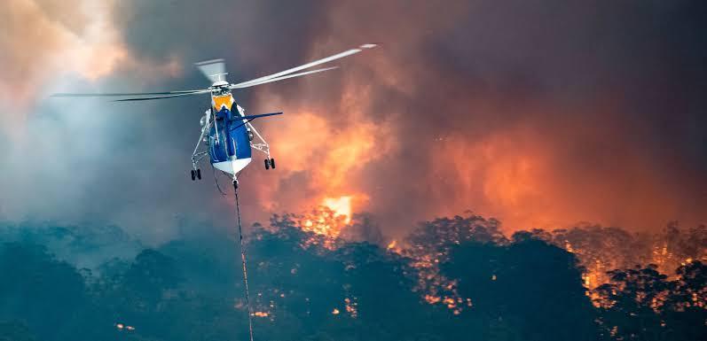Medio billón de animales murieron por incendios en Australia.