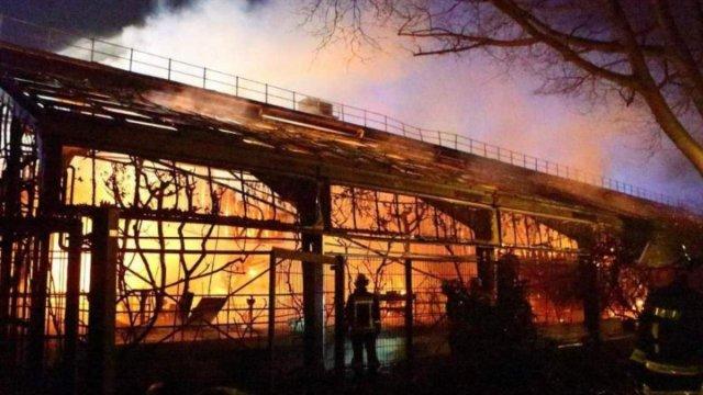 Mueren más de 30 animales en zoológico de Alemania por incendio.
