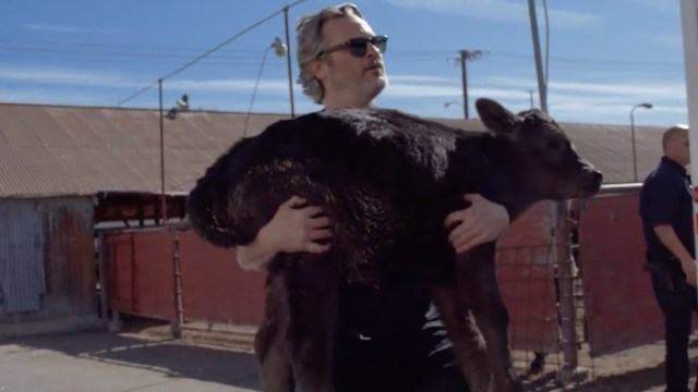 Joaquin Phoenix, Joker, Vaca, Matadero