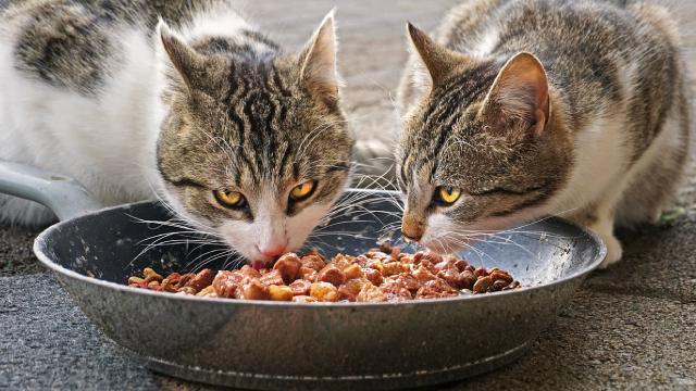 Mascotas, Comida, Saludable, Prohibidaludable, Prohibida