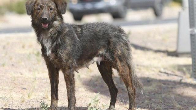 En México el abandono de animales podría ameritar cárcel (Imagen: AnimalHeroes)
