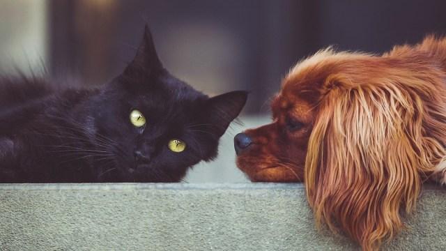 China, Matanza, Gatos, Perros