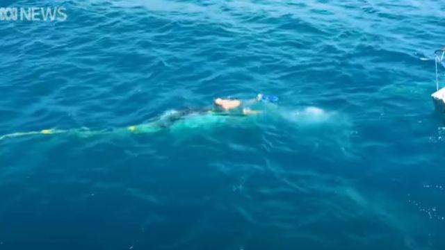Multan a hombre por rescatar a ballena en Australia