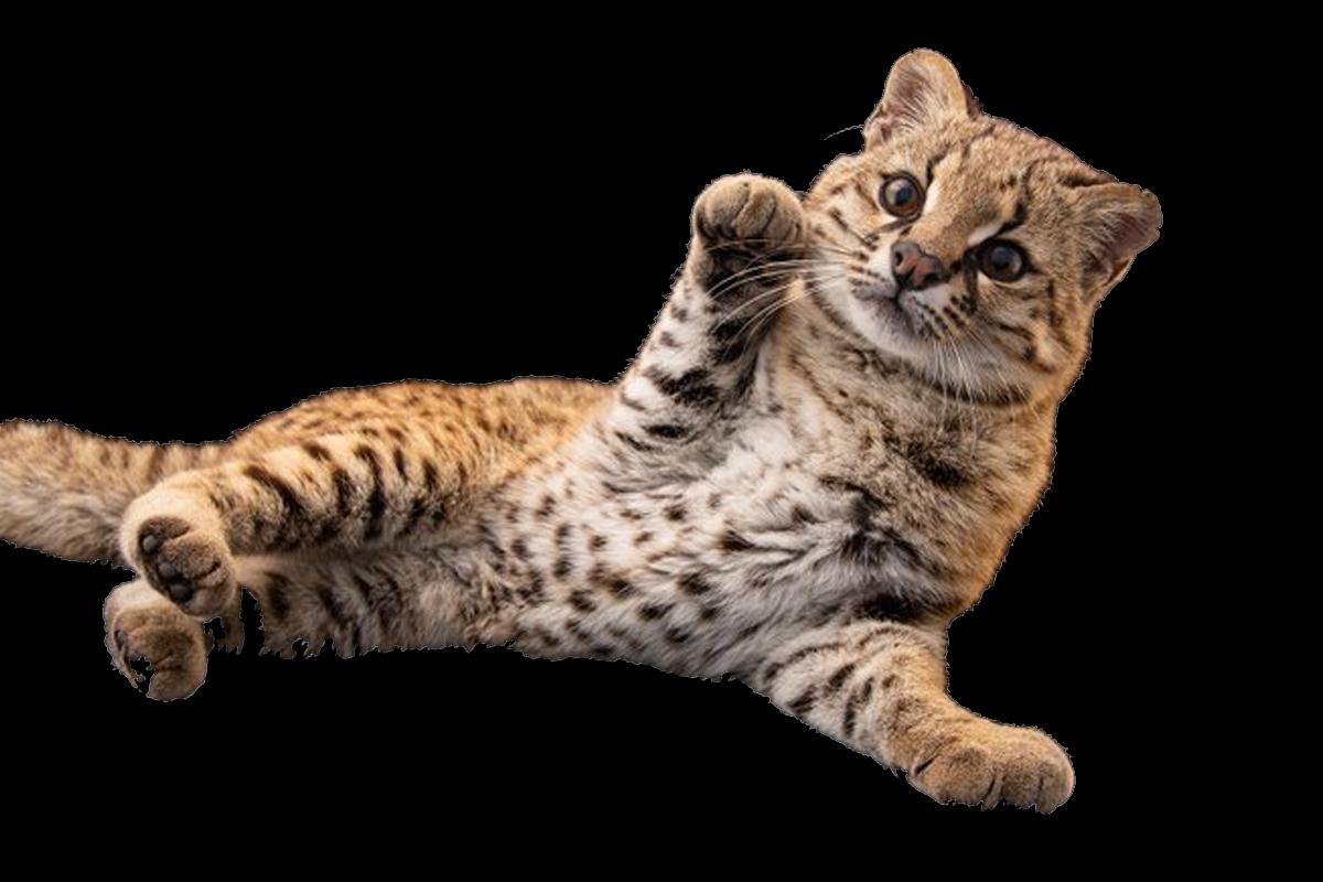photo-ark-animales-peligro-extincion-national-geographic