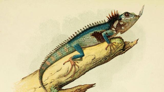 largarto-con-cuerno-extinto-130-anos