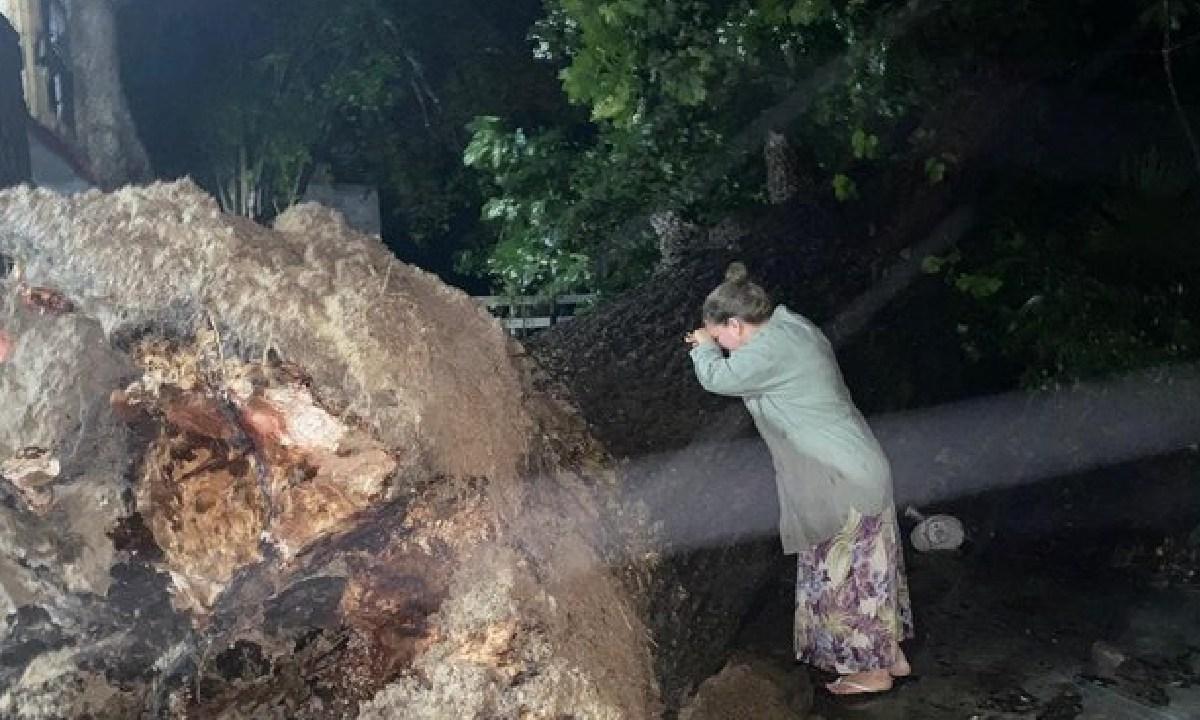En Nuevo León un nogal de 100 años fue arrancado por la ventisca derivada del huracán Hanna