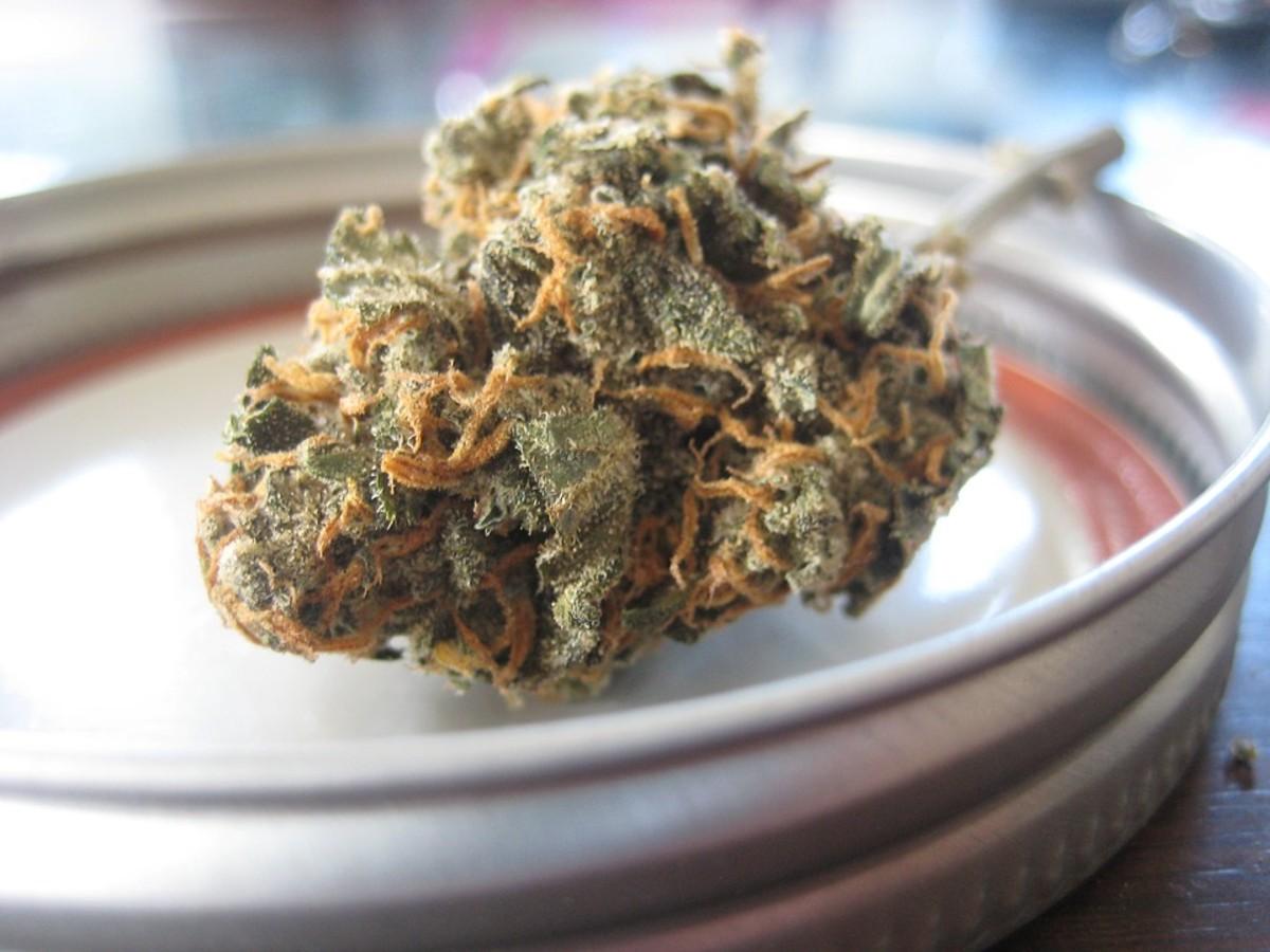 AMLO afirma habrá reforma legal consumo medicinal marihuana