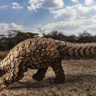 Ghost: el pangolín gigante que podría ayudar a salvar la especie