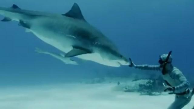 Tiburón que no se había visto en más de 100 años fue visto en Sudáfrica