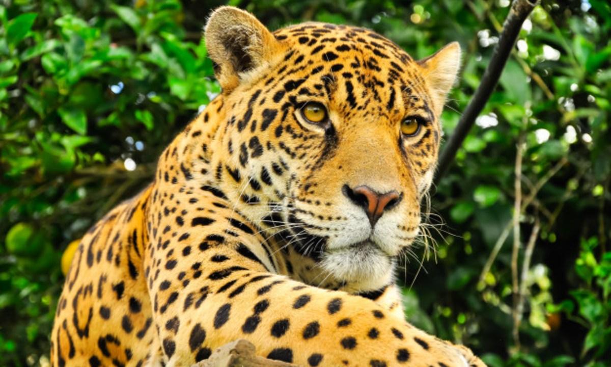 Más de 500 especies mamíferos podrían extinguirse este siglo