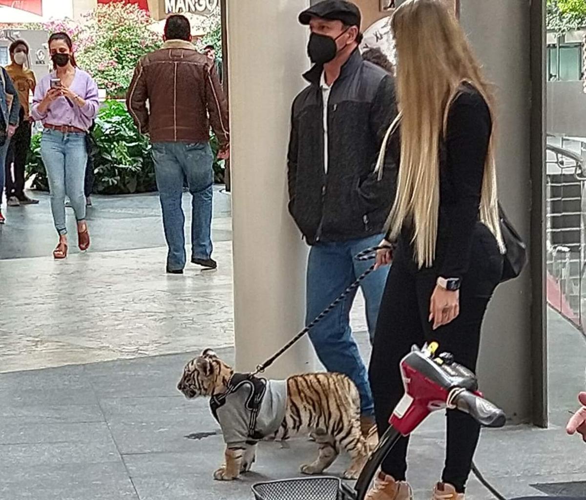 Mujer captada paseando cachorro tigre de Bengala Antara Polanco