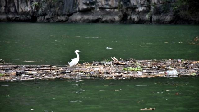 El Programa de Conservación de Humedales informó que debido a la pandemia sacaron más de mil toneladas de basura del Cañón del Sumidero