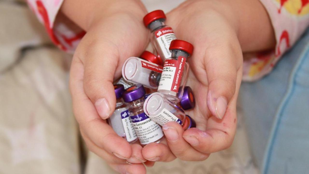 ensayo vacuna contra cáncer pulmón intestino páncreas reultados prometedores