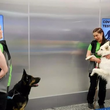experimentos perros rastreadores covid-19 resultados prometedores Finlandia