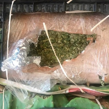 Elementos de la Guardia Nacional aseguraron casi dos toneladas de marihuana escondida en nopales en Nuevo León