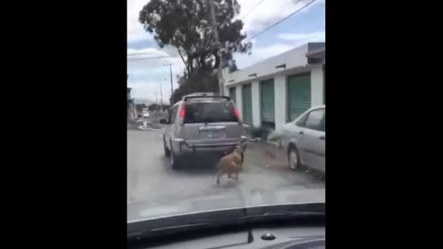 Un video muestra como, en el municipio de Mineral de la Reforma, en Hidalgo, arrastran a perrito amarrado a una camioneta, Captura de Video