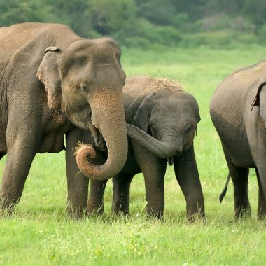 multitud ataca flechas antorchas elefantes India