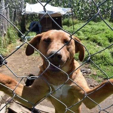 proponer prohibir animales amarrados, azoteas, encadenados Coahuila