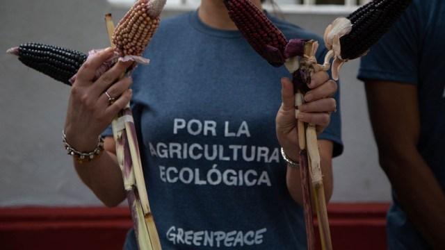 Mayas denuncian siembra soya maíz transgénicos Hopelchén Campeche