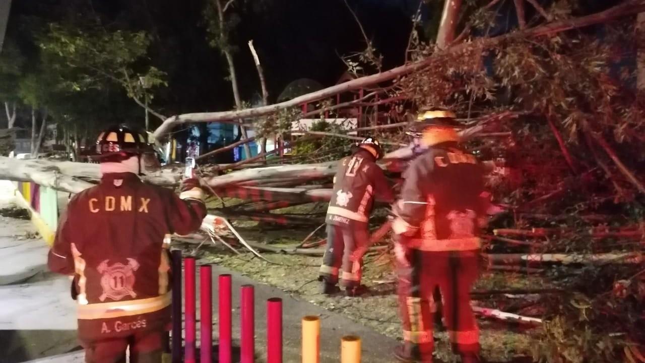 videos rachas de viento provocan caída de árboles en CDMX