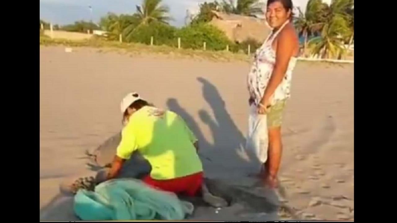 captan pareja saqueando nido tortuga puerto arista chiapas