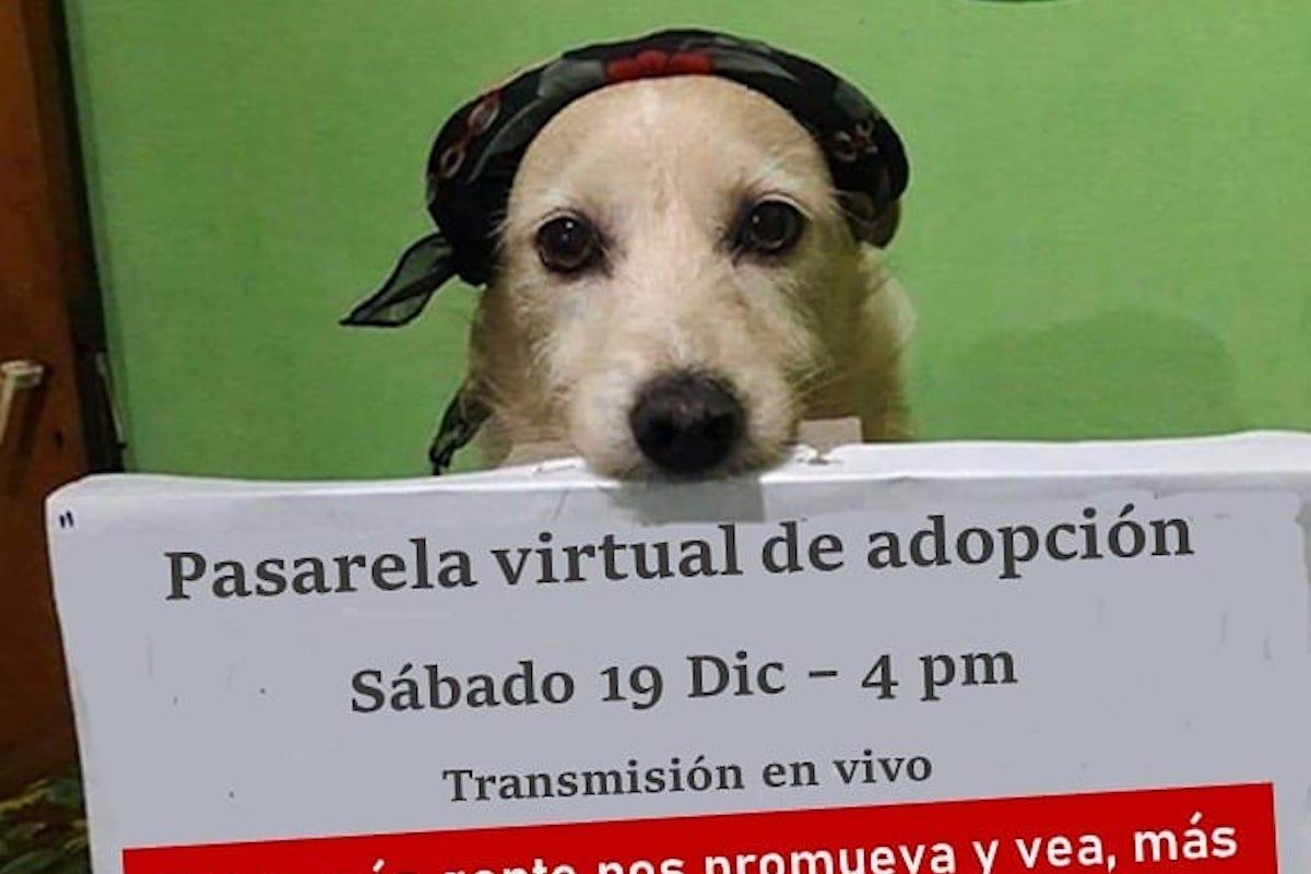 Organizan pasarela virtual de perros y gatos para que los puedan adoptar